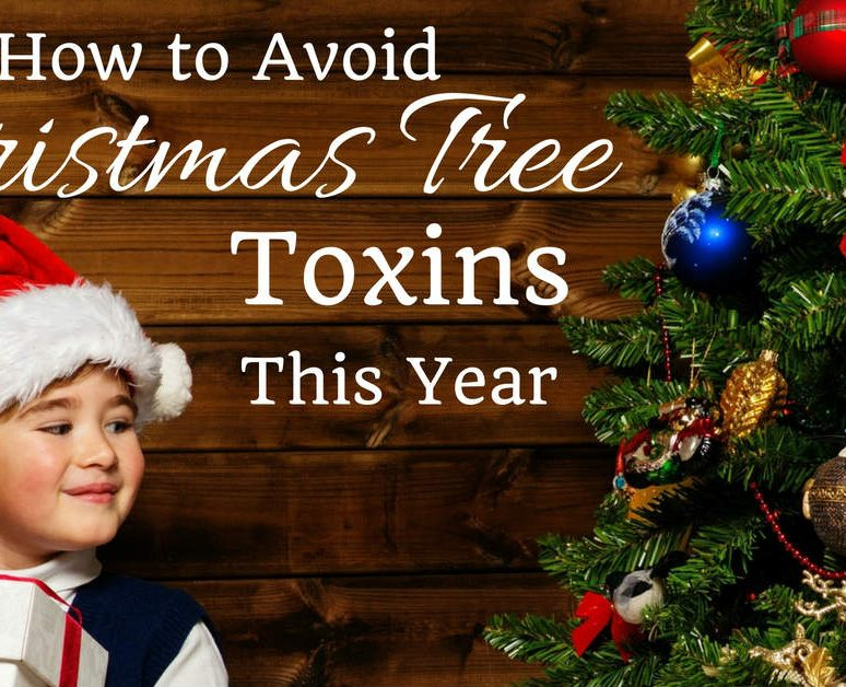 How to Avoid Christmas Tree Toxins This Year