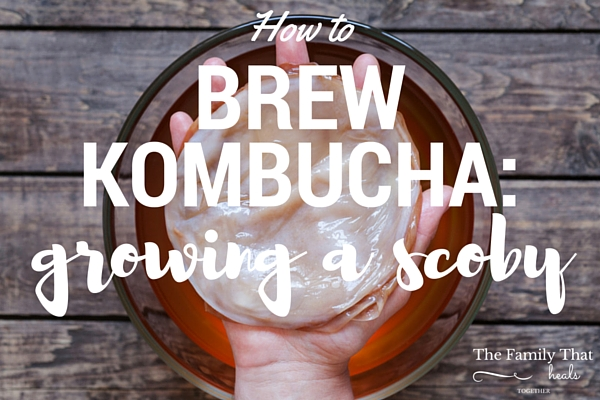 How to Brew Kombucha: Growing a Scoby | The Family That Heals Together